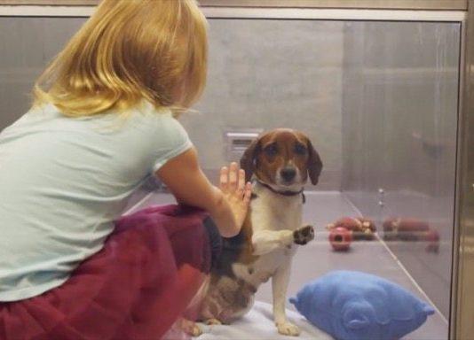adoptando-un-perro
