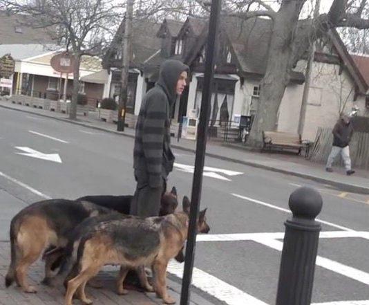 paseo-5perros-sin-correa