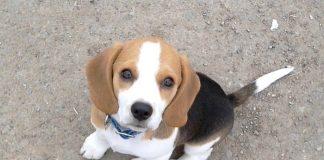 Pyme-inteligencia-de-los-perros
