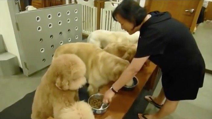 vídeo de perros muy educados comiendo