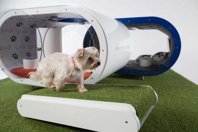 Casetas-para-perros-Samsung-cinta-andadora