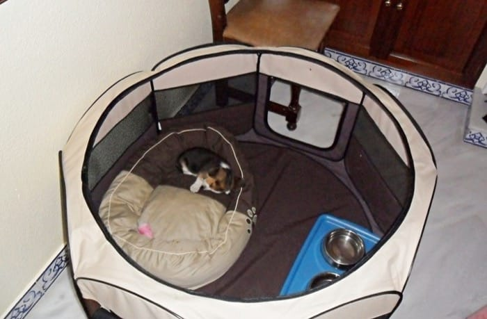 cachorro Balto-Con 2 meses - en su parquecito de lona