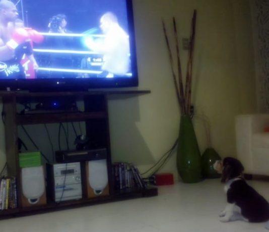 cachorro-beagle-juanito-bisteses-2