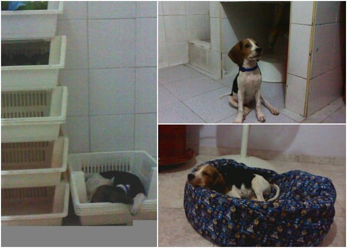perrito-beagle-winter-colombi