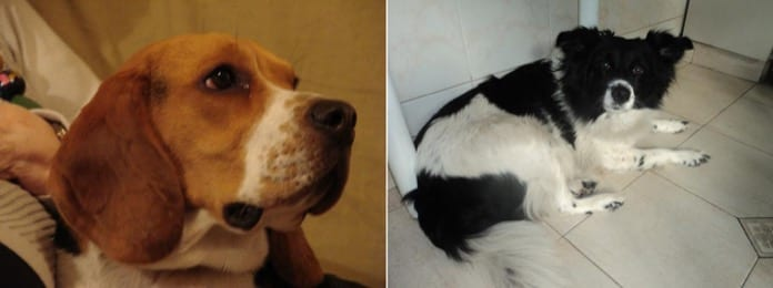 perritos Agustin y Diana - Argentina